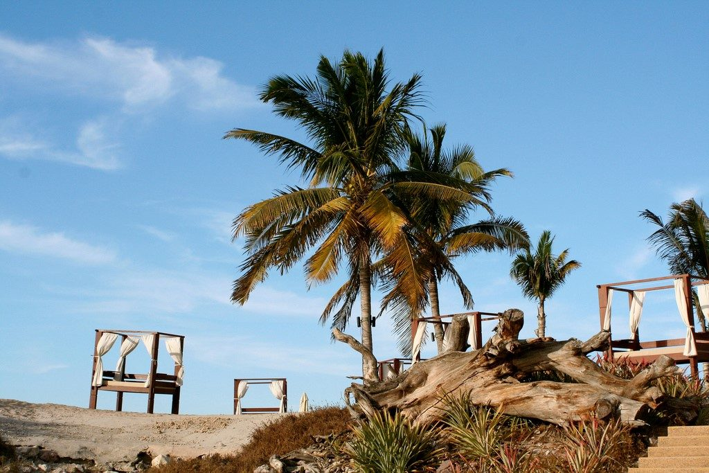 Palm tree in Punta Mita area