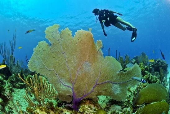 A diver enjoying the undersea world